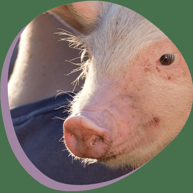 Dierenwelzijn